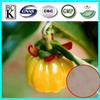 Hot sale GMP factory 100% 100% natural garcinia cambogia fruit extract