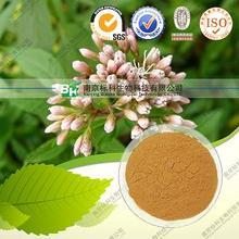 Best Quality Natural Fortune Eupatorium Herb P.e.