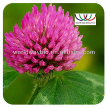 organic Red Clover powder extract 10% isoflavones