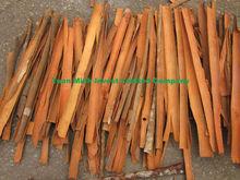Split Cinnamon Vietnam Original
