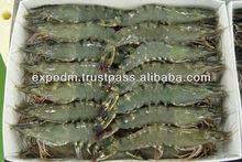Fresh Black Tiger Shrimps