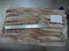 Sea Frozen Loligo Squid