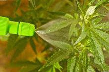 Seaweed Extract 22%