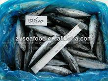 Export Tropical Fish Frozen Bonito Flake