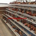 Taiyu 120 birds hot sale a type chicken cage