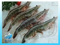 Frozen whole live vannamei prawn/shrimp