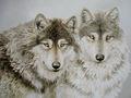 3d le foto del lupo