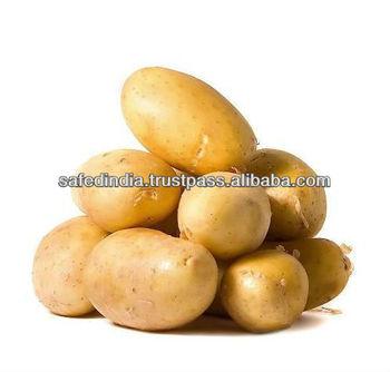 Fresh Potato from India