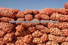 Potato in Bulk quantity