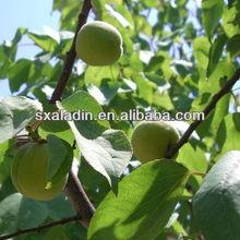 Plant Extract Amygdalin 98%/vitamin /Semen Armeniacae Amarae