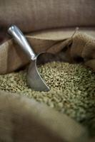 Green coffee Arabica
