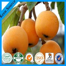 Loquat Leaf Extract /Ursolic Acid/Folium Eriobotryae extract