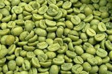 Green coffee beans bulk from Brazill