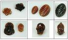 Sumatran Amber Carvings