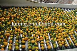 2013 new crop Fresh Baby Orange-factory supplying