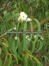 Pure, Eucalyptus Oil