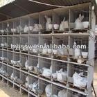 Rabbit Farming In India