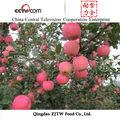 alto grau blush vermelho iraniano maçã fresca