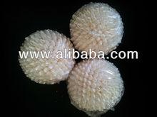 Shell Crafts White Palay Ball