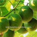 Luo han guo extracto/natural de aditivos alimentarios/mogroside v