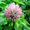 ISO quality Natural Red Clover Extract Formononetin 485-72-3