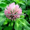 High quality natural red clover p.e. Powder