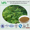 ISO quality natural black cohosh extract triterpenes 2.5% 5% 8%