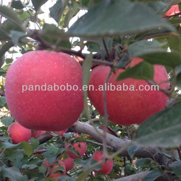 2013 Hot! Hot! fruit market prices apple