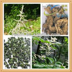 Natural black cohosh extract / black cohosh saponin / black cohosh powder