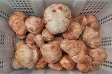 desert truffles from algeria