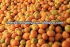 2013 fresh Madrain Oranges/Baby orange/ Chinese honey orange