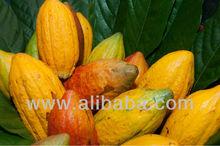 PREMIUM SELECT QUALITY COCOA BEANS