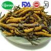 100% natrual yarsagumba extract powder/yarsagumba/yarsagumba powder