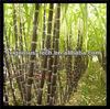 Top Quality sugar cane wax extract/sugar cane wax/sugar cane wax powder