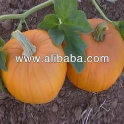 Pumpkin Fresh Vegetables