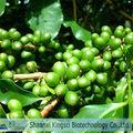 Naturale caffè verde estratto di fagiolo/acidi clorogenico 50%/estratto di caffè verde