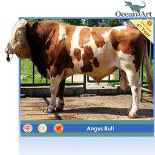 Playground fiberglass Animals Animatronic Angus Bull