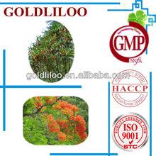GMP FDA Eucalyptus Extract