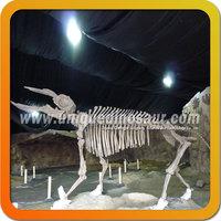 Discover Animal Skeleton For Museum Skeleton Replica