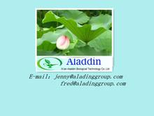 Nuciferine/Lotus Leaf Extract/Lotus Leaf P.EWith High Quality