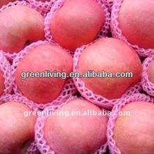 2014 fresh organic fuji apple(red delicious apple )