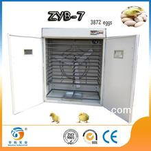 Hot!!!! fertile parrot eggs for sale egg incubator uae On promption ZYB-7