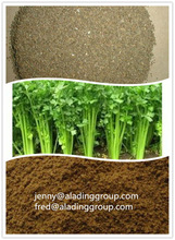 Vegetable Seed Powder,Celery Seed Extract 10:1 Or Other Specs