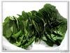 100% Natural Tarragon leaf Plant Extract