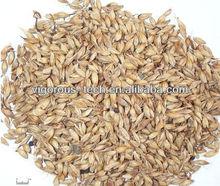 High quantity malt extract/malt extract powder/price of barley malt
