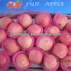 wholesale fruits pakistan in our facotory is the lowest with highest quality from China