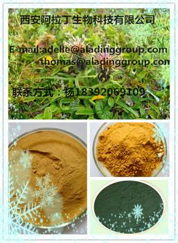 Medicine Grade Black Cohosh Extract 90% Triterpenoid Glycosides 2.5%HPLC