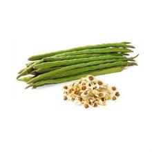 Moringa Seed Oil in Bulk for Fragrance or Cosmetic