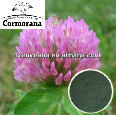 Top quality natural red clover extract, Isoflavones 5%-40% HPLC