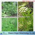 La plus favorable pour 100% naturel cnidium monnieri